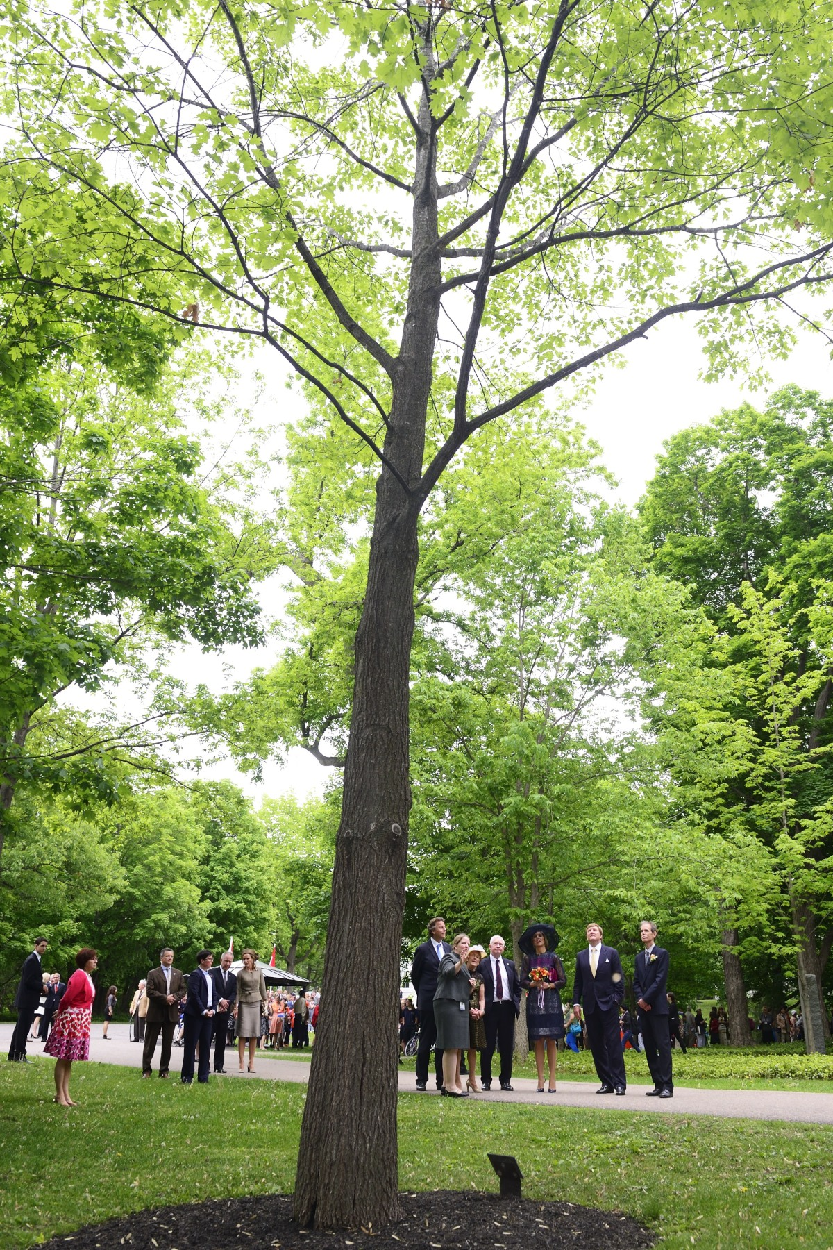 Their Majesties admired the Red Oak tree planted by Her Majesty Queen Beatrix in 1988.
