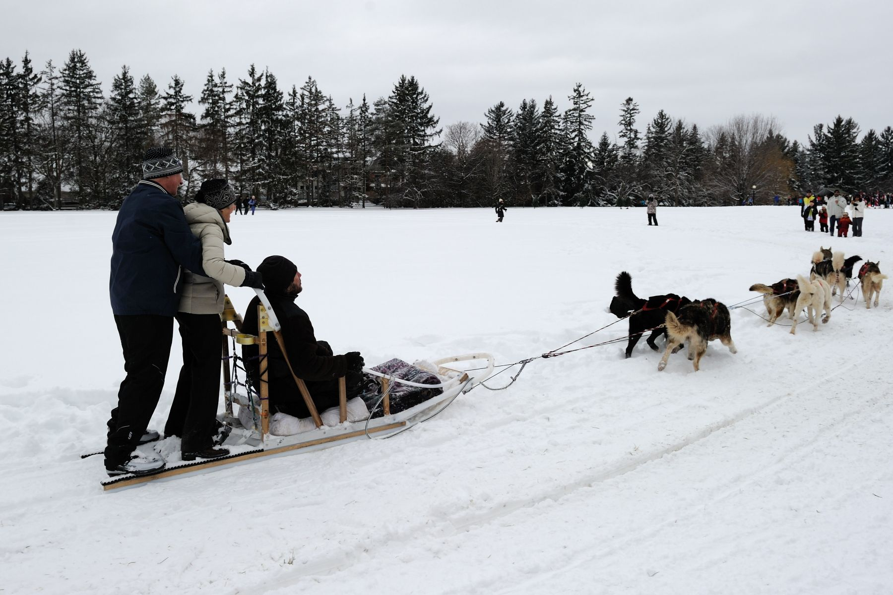Their Excellencies enjoyed a dog sled ride on the grounds of Rideau Hall.
