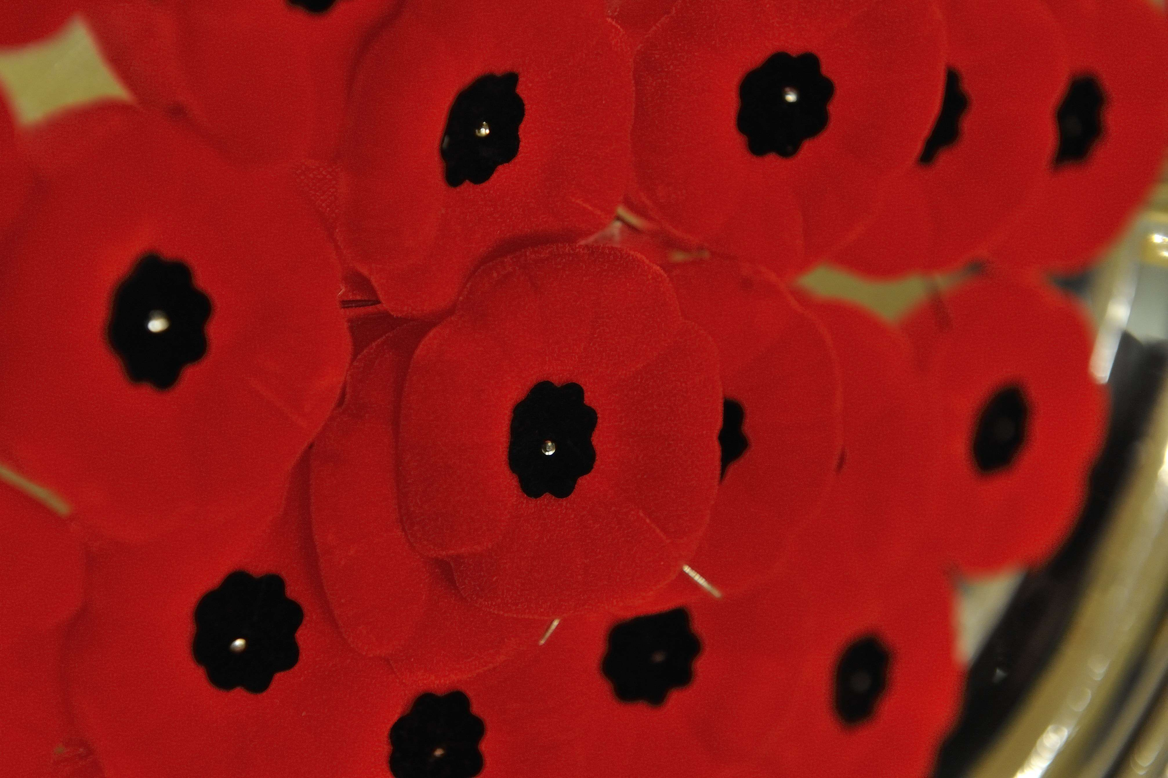 Poppies will be available to the general public beginning October 26, 2012.