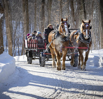 Two brown horses pull people seated on a large red wagon.  They are being pulled along a cleared snow path with trees on either side.