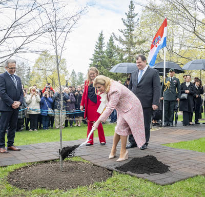 The President shovels earth onto the blue-beech tree planted to mark her State visit.