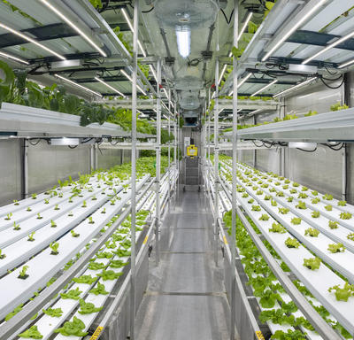 Hydroponic gardens at Churchill Northern Studies Centre.