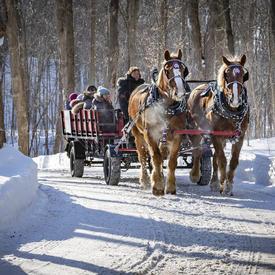Deux chevaux bruns tirent un wagon rouge sur lequel les gens sont assis.  Ils sont entraînés le long d'un sentier déneiger avec des arbres de chaque côté.