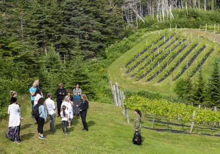 The Governor General speaking to a small group of people outside at the Domaine des Salanges winery, green vineyards in the background.
